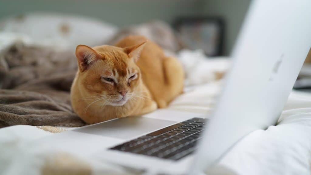 Gato en PC