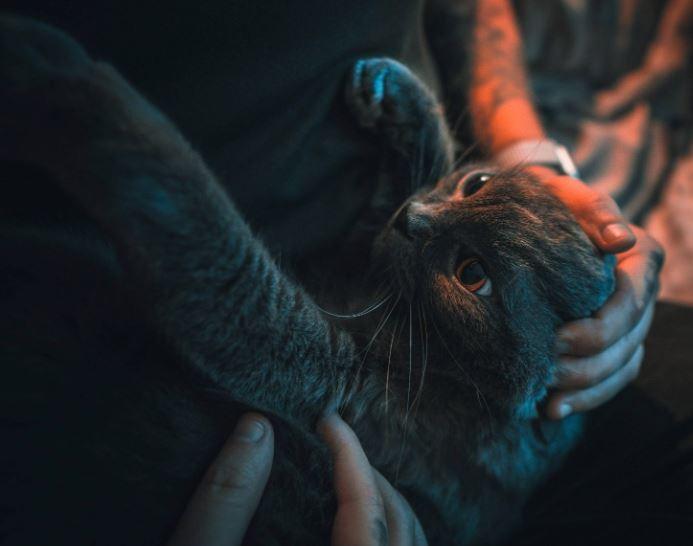 Beneficios tener un gato